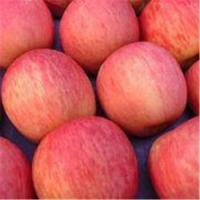 Wholesale Fuji apples from china suppliers