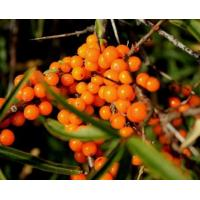 China Chinese herb medicine Sea Buckthorn Berry Fruit Extract on sale