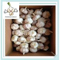 Buy cheap 2015 bulk shandong pure white garlic frozen fruits newest wholesale fresh garlics from Wholesalers