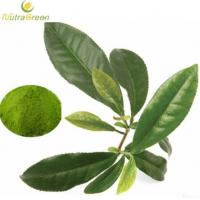 Wholesale Green Tea Extract Powder L-theanine 30% from china suppliers
