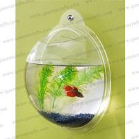 China FT (4) acrylic wall hanging fish tank on sale
