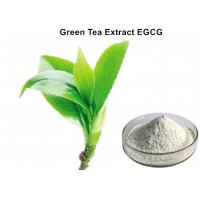 Wholesale EGCG Green Tea Extract Powder Super high content  Anti - tumor effect for pharmaceutical industries from china suppliers