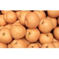 China Fresh Huangguan Pears / Crown Pear Heath Benifits With Nutrition Value on sale