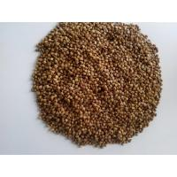 Wholesale natural China origined roasted buckwheat kernels exported Russian from china suppliers