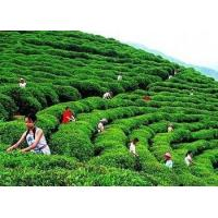 Wholesale natural Chinese Se-enriched green tea from china suppliers