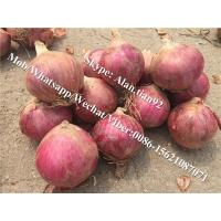 China 5-7cm, Mesh bag Package Chinese Fresh Red Onion For All Market on sale