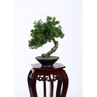 Wholesale Botanical Mix Decorative Pine Trees , 40cm Faux Bonsai Tree Nature Inspired from china suppliers