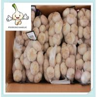 Buy cheap frozen fruits originality garlic come from china chinese fresh white garlic from Wholesalers