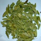 China Senna Leaf Extract on sale