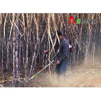 Wholesale The Factory Price Small Multi-Purpose Lawn Sugarcane Harvester for Farming Machine, from china suppliers