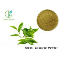 Wholesale Water Soluble Pure Green Tea Extract Camellia Sinensis Leaf Extract Anti - Caries Effect from china suppliers
