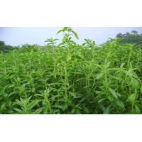 Quality Stevia Extract for sale