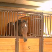Wholesale Bamboo Board Metal Horse Fence Stable Panel With Durable Sliding Door from china suppliers