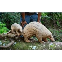 Wholesale life size animal statue  pangolin props model fiberglass nature painting as decoration statue in garden from china suppliers