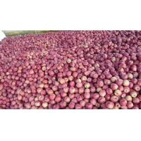 Wholesale Red Delicious Apples from china suppliers