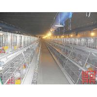 Buy cheap A Frame Semi Automatic Pullet Chicken Cage from wholesalers