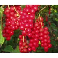 Wholesale 100% natural schiandrins,pure schisandra extract 1%~25% HPLC powder from china suppliers
