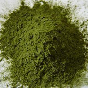 Premium Spray Dried Oat Grass Juice Powder for Bulk Sale Factory Direct Sale