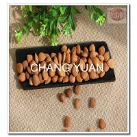 China Fresh bulk raw bitter apricot seeds type in apricot kernels and apricot nut for sale in 2016 on sale