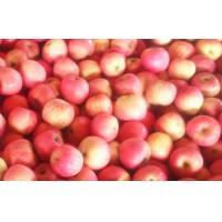 China Organic Nutrition Fuji Apple , Fresh Fruit For Human Health on sale