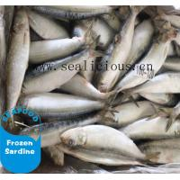 Wholesale cheap price frozen sardine for canned sardine fish from china suppliers