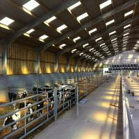 Wholesale Low cost Cow Feeding Industry Steel Structure Shed with Modern Design from china suppliers