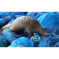 Wholesale public art large pangolin sculptures statues of fiberglass nature painting as decoration statue in garden theme park from china suppliers