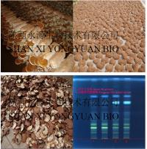natural immunity enhancement, Reishi Mushroom Polysaccharides 30%,Mushroom Extract, Shaanxi Yongyuan Bio-Tech, Chinese
