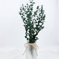 China Artificial Dried Eucalyptus Plant , Preserved Silver Dollar Eucalyptus on sale
