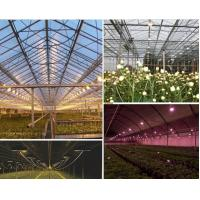150W led grown light , high power and purity led plant light with 3years warranty Meanwell power supply CE RoHS