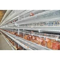Buy cheap Layer Chicken Cage from wholesalers