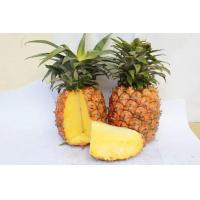 Wholesale Pineapple from china suppliers