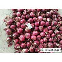 China Juicy Sweet Red Onion 10 Kg / Bag Packing White Flesh For Cooking on sale