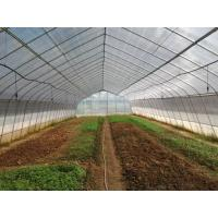 Wholesale Gothic Structure Single Tunnel Greenhouse Hot Dip Galvanized Tube Frame from china suppliers