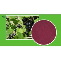 Wholesale Ribes Nigrum L Organic Food Ingredients Blackberry Fruit PowderWith Flavonoids from china suppliers