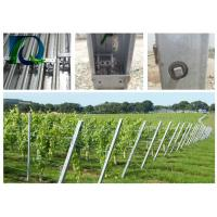 Wholesale Hot Dipped Galvanized Grape Vine Posts / Heavy Duty Vineyard End Posts For Grape Growing from china suppliers