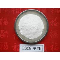 Quality 100% Natural Green Tea Extract Polyphenols and EGCG 98% powder for sale