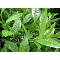 Wholesale Green tea extract   GMPmanufacturer supply from china suppliers
