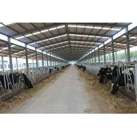 Wholesale Steel structure cowshed from china suppliers