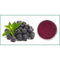 Wholesale Blackberry Powder,Black Red Powder,Fruit and Vegetable Powder from china suppliers