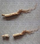 natural herbal medicinal edible plant TCMs Chinese ginseng wild ginseng