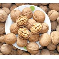 China Chinese Natural Dry Fruit Walnuts/Walnuts in Shell on sale