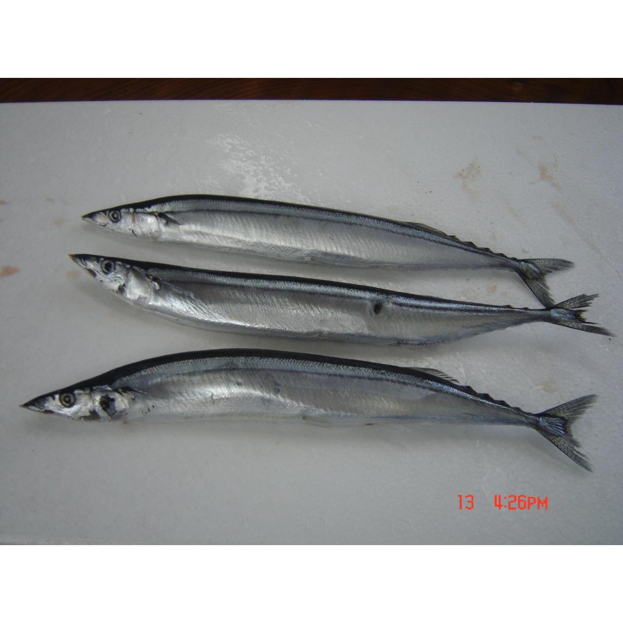 Wholesale Fish Pacific saury from china suppliers