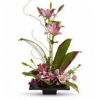 Wholesale Imagination Blooms with Cymbidium Orchids [T256-1A] from china suppliers