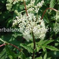 China Dong Quai Extract,Angelica Sinensis on sale
