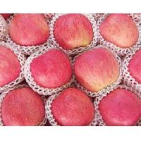Wholesale Fuji Apple Series from china suppliers