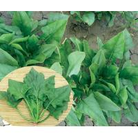 Wholesale Spinach Overlord star 101 from china suppliers