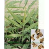 Wholesale Ginger Extrac Ginger Extract (GJ) from china suppliers