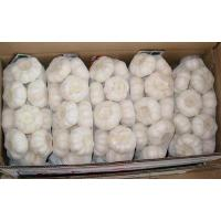 Wholesale Garlic from china suppliers