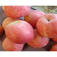 Wholesale FUJI Apple /Red delicious Apple from china suppliers